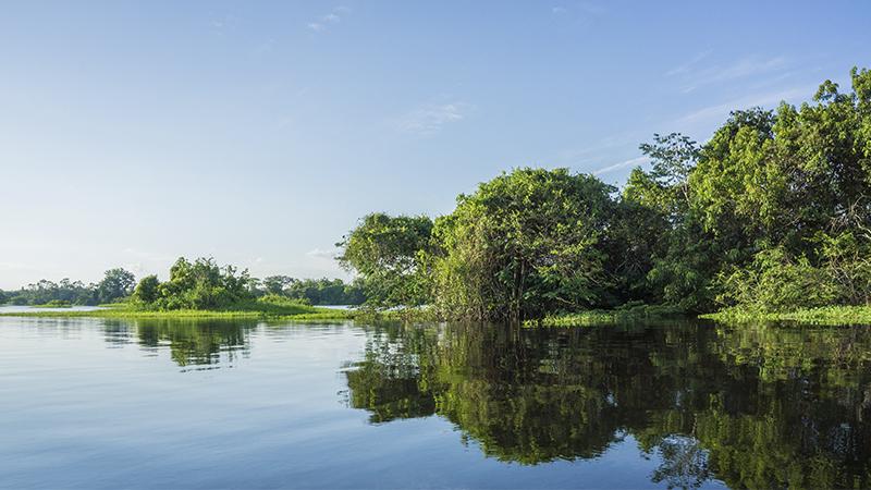 Floresta no bioma amazônico, no Brasil