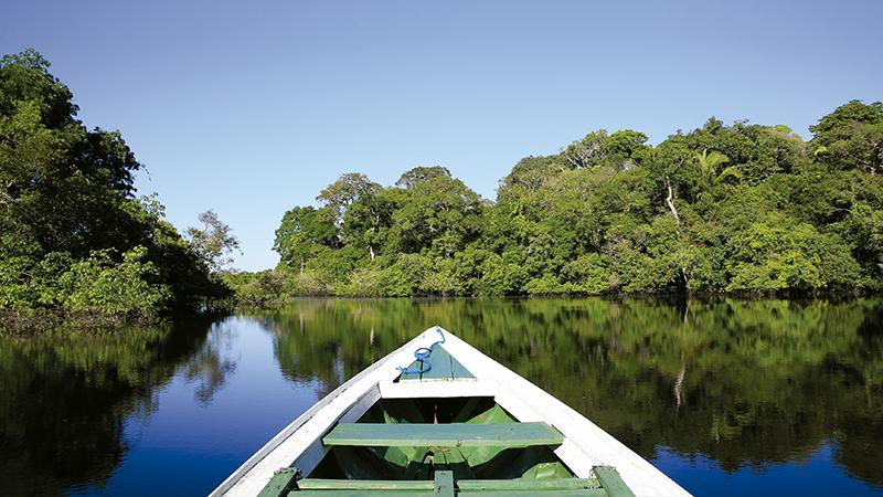 XP, Aviagen e Overseas Resources investem R$ 5 milhões no Fundo JBS pela Amazônia